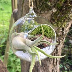 Hanging Air Plant Terrarium Kit | Woodland Themed | Tillandsia