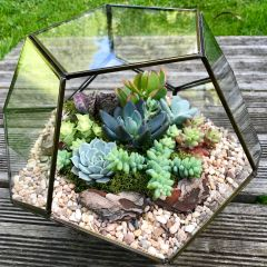 Custom Made Geometric Glass Succulent Terrarium (COLLECTION ONLY!)