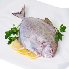 Fresh Black Pomfret (Clean And Gutted) 300 g