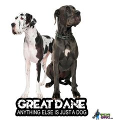 Great Danes - Anything Else is Just a Dog