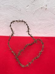 Massive long section of German barbed wire very nice condition recovered in 2014 from what was no mans land in between the German and British front lines at Maricourt on the 1916 Somme battlefield