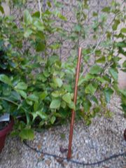 Copper Bird Feeder Pole (optional)