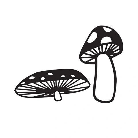"Mushrooms Embossing Folder (4.24""x5.75"") by Darice"