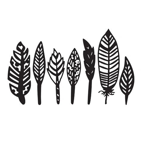 "Feathers Embossing Folder (4.24""x5.75"") by Darice"