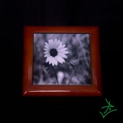 Medium Square Black & White Daisy Premium Tile Box