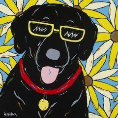 Happy - Black Labrador Retriever