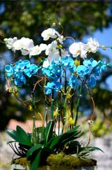 Blue orchids Centerpiece