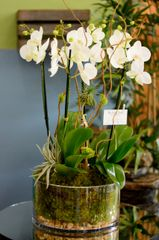 Two Amazing White Orchids