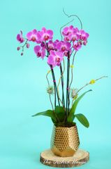 Two Purple Orchids in a Gold Ceramic Container