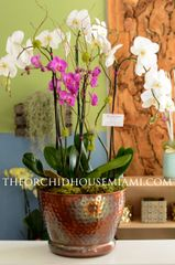 Beautiful Orchid Arrangement in a Metallic Container