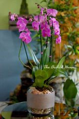 Pink and Purple Orchid Arrangement