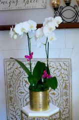 Two White Orchids in a Gold Ceramic Container
