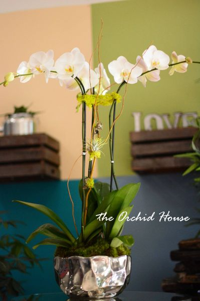 Three White Phalaenopsis Orchid In A Silver Vase The Orchid House