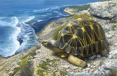 "Sokake: On the Horizon at Cap Sainte Marie, 24"" x 36"" Canvas Giclee"