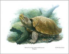 """Siebenrockiella leytensis, 11"""" x 14"""" Limited Edition Print"""