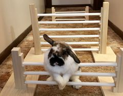 INDOOR RABBIT 3-JUMP SET