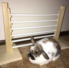 "House Rabbit Single 12"" Jump"