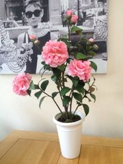 REALISTIC ARTIFICIAL PINK CAMELIA ROSE PLANTED ARRANGEMENT IN TALL WHITE GLOSS PORCELAIN PLANTER