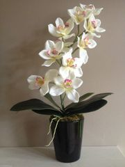 CREAM SILK ORCHID PLANT ARRANGEMENT WITH LEAVES IN BLACK GLOSS PLANTER