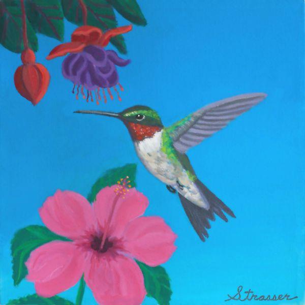 Hummingbird   14 x 14 Print