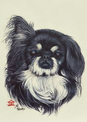 """Sing Ling"" ... Pekingese, 5 x 7 Note Cards, 12-Pack"