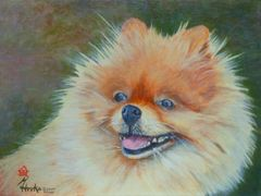 """K"" The Pomeranian (Head Study) ... 5 x 7 Note Cards, 12-Pack"