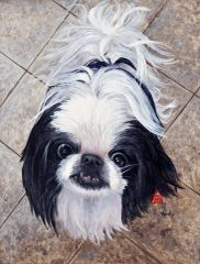 """Jackson"" ... Japanese Chin, 5x7 Note Cards & 8x10 Matted Print"