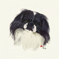 """Izzy"" ... Japanese Chin, 5 x 7 Note Cards & 8x10 Matted Print"