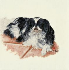 """Willie"" ... Japanese Chin, 5x7 Note Cards & 8x10 Matted Print"