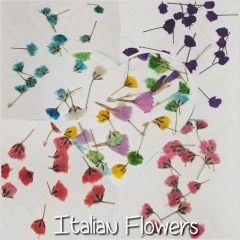 Real Tiny Italian Dried flowers (20 mixed color flowers)