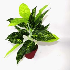 Artificial Medium 40cm Dieffenbachia Light Plant