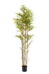 Bamboo Tree 195cm