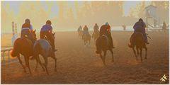 Racetrack Cashmere