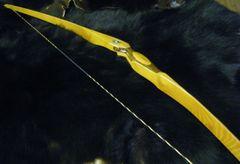 "58"" 52#@28"" Bocote and Osage Classic Longbow"
