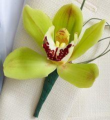 Mini Cymbidium Orchid Ringer Bearer