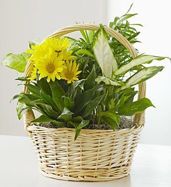 With Love Dish Garden & Fresh Cut Flowers
