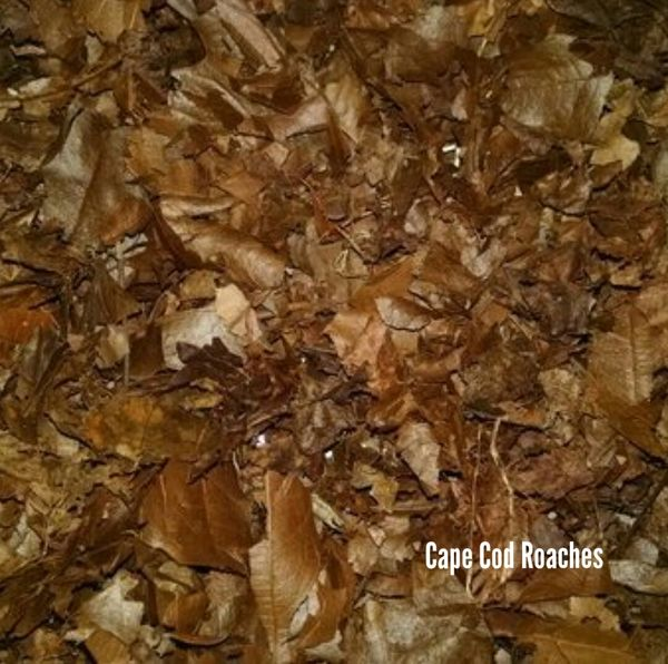 Deciduous Hardwood Crushed Leaves