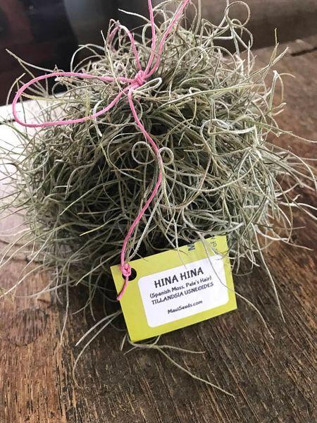 hina hina spanish moss tillandsia usneoides live plant maui seeds