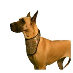 Fashion Dog Cool Collar