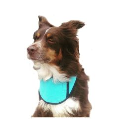 Dog Cool Collar