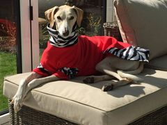Dog Fleece Jumper - High Performance