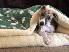 Snuggle Wrap Beds - Sherpa Lined - Super Soft Cuddle Fleece