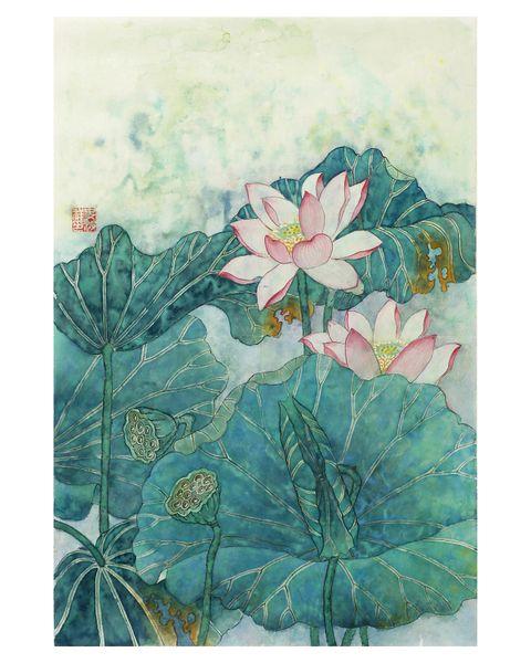 Pink Lotus Flowers in Full Bloom