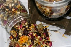 Rodentia Tea