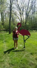 6 foot plus Flamingo ( pick up only )