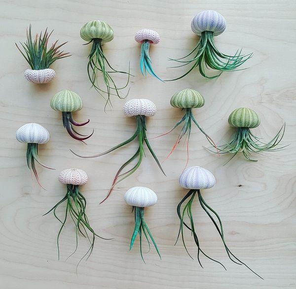 Multi-Color Sea Urchin & Air Plant - Set Of 12, 24 & 50