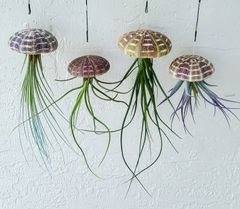 Jumbo Air Plant Jellyfish - Set Of 1, 3 & 10