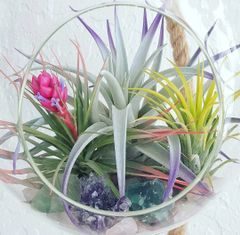 Extra Large Glass Terrarium With Rope