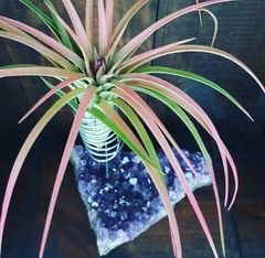 Amethyst Geode Air Plant Holder - Large