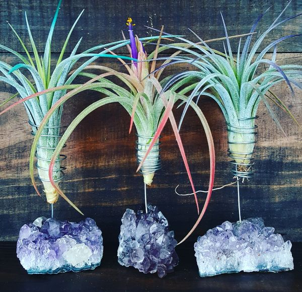 Amethyst Geode Air Plant Holder - Small